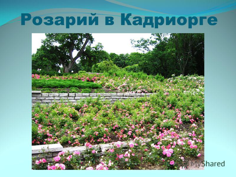Розарий в Кадриорге