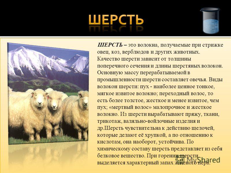 ШЕРСТЬ – это волокна, получаемые при стрижке овец, коз, верблюдов и других животных. Качество шерсти зависит от толщины поперечного сечения и длины шерстяных волокон. Основную массу перерабатываемой в промышленности шерсти составляет овечья. Виды вол