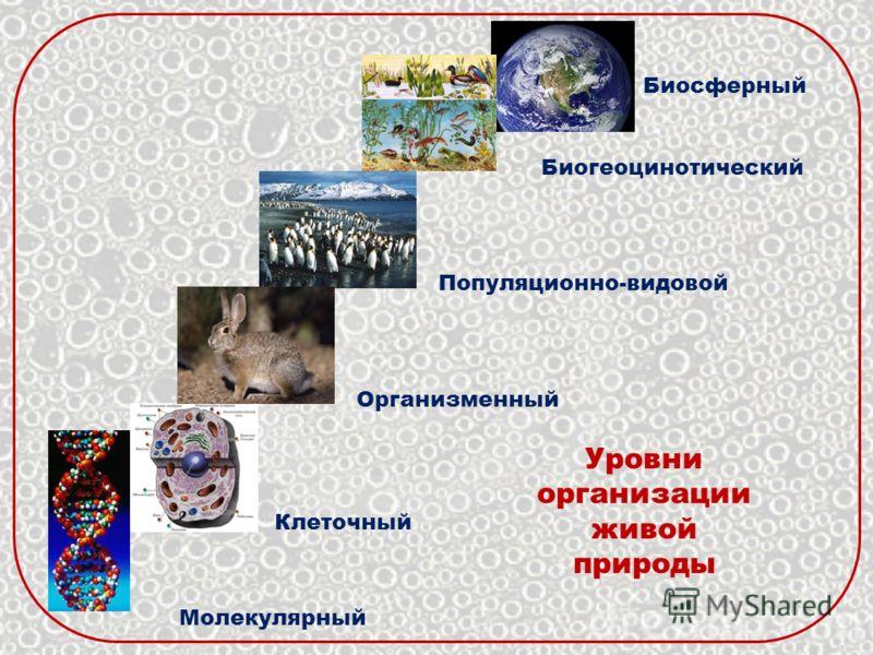 Уровни организации живой природы Молекулярный Клеточный Организменный Популяционно-видовой Биогеоцинотический Биосферный