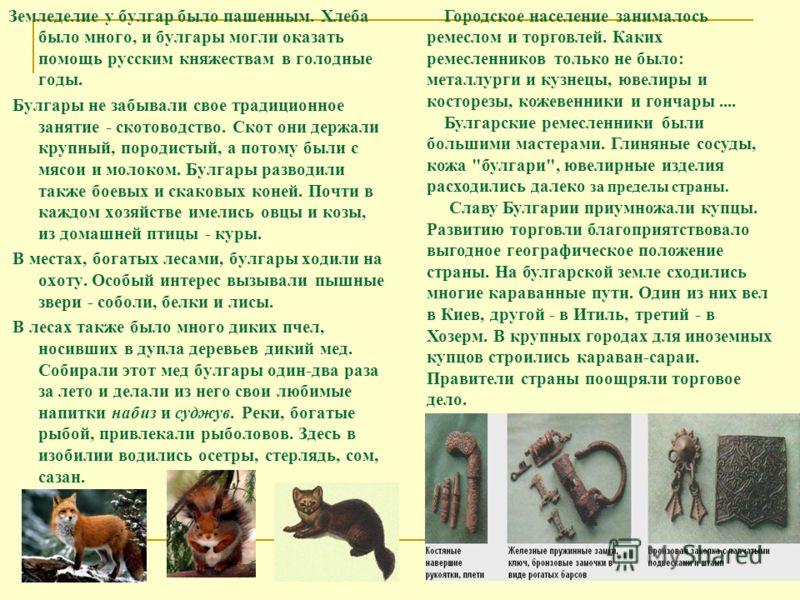Земледелие у булгар было пашенным. Хлеба было много, и булгары могли оказать помощь русским княжествам в голодные годы. Булгары не забывали свое традиционное занятие - скотоводство. Скот они держали крупный, породистый, а потому были с мясои и молоко