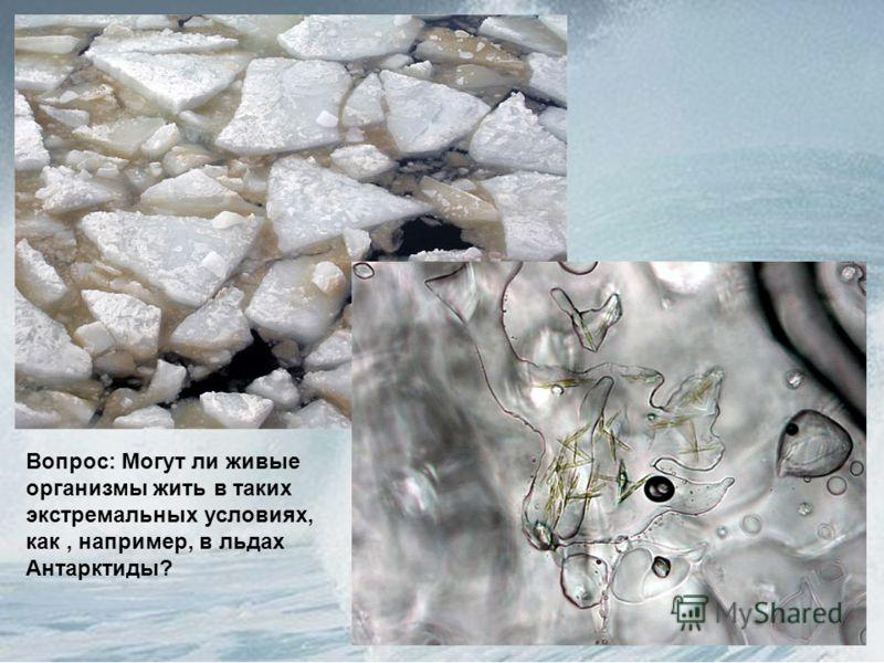 Вопрос: Могут ли живые организмы жить в таких экстремальных условиях, как, например, в льдах Антарктиды?