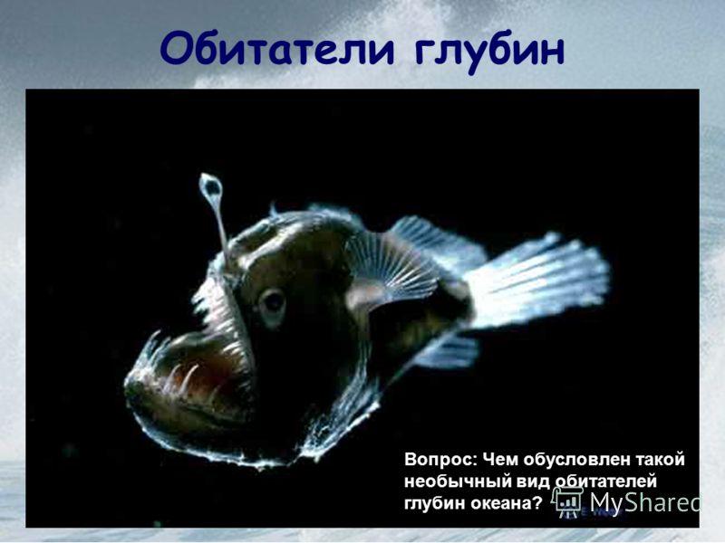 Обитатели глубин Вопрос: Чем обусловлен такой необычный вид обитателей глубин океана?