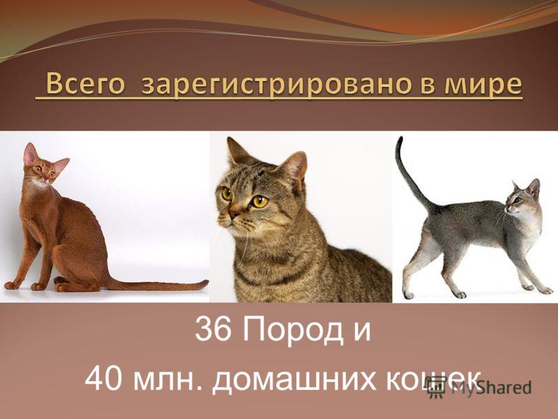 36 Пород и 40 млн. домашних кошек
