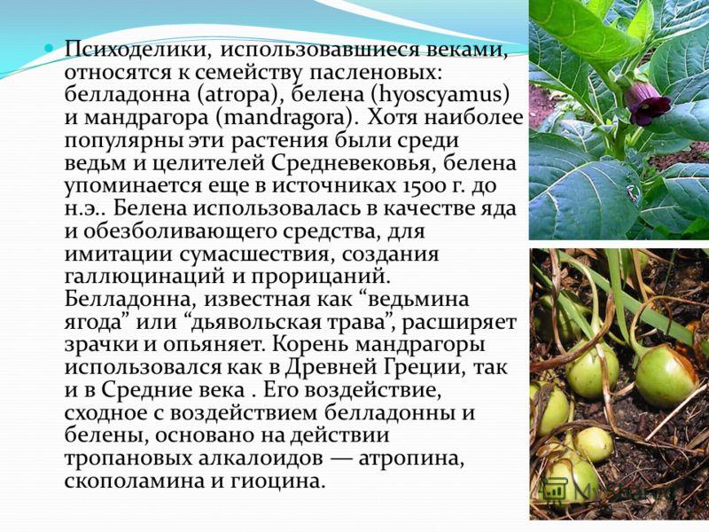 Психоделики, использовавшиеся веками, относятся к семейству пасленовых: белладонна (atropa), белена (hyoscyamus) и мандрагора (mandragora). Хотя наиболее популярны эти растения были среди ведьм и целителей Средневековья, белена упоминается еще в исто