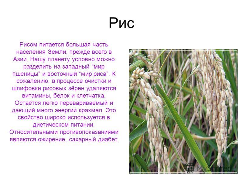 Рис Рисом питается большая часть населения Земли, прежде всего в Азии. Нашу планету условно можно разделить на западный мир пшеницы и восточный мир риса. К сожалению, в процессе очистки и шлифовки рисовых зёрен удаляются витамины, белок и клетчатка.