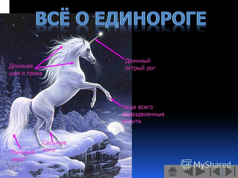 Длинный острый рог Длинная шея и грива Чаще всего нераздвоенные копыта Сильные ноги Пышный хвост
