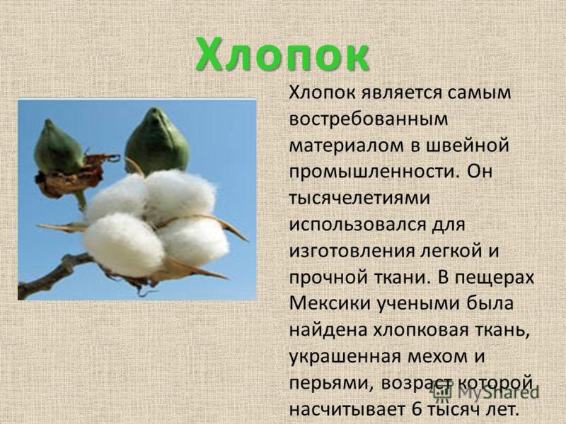 Хлопок Хлопок является самым востребованным материалом в швейной промышленности. Он тысячелетиями использовался для изготовления легкой и прочной ткани. В пещерах Мексики учеными была найдена хлопковая ткань, украшенная мехом и перьями, возраст котор