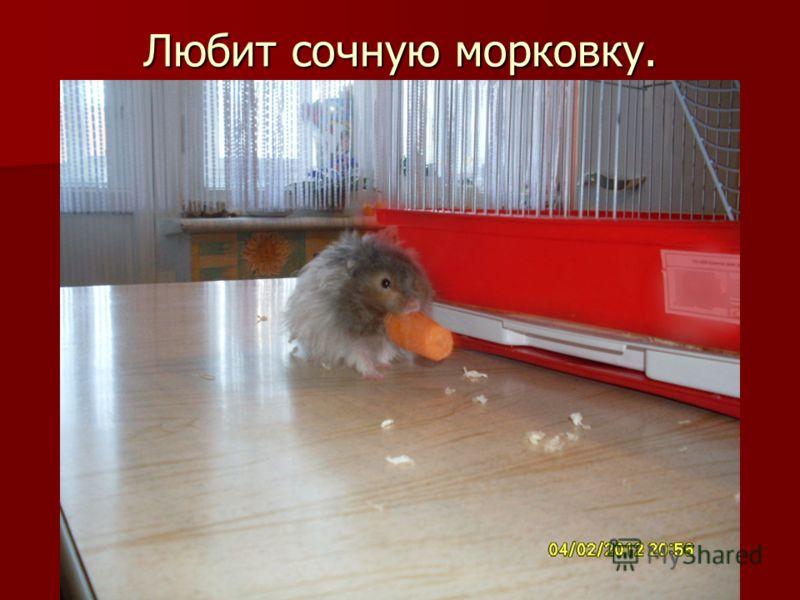 Любит сочную морковку.