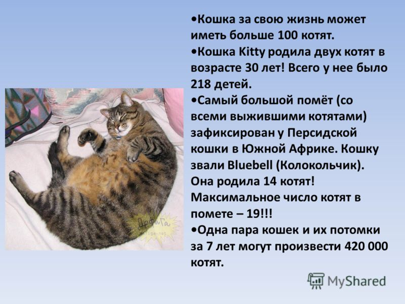 Кошка за свою жизнь может иметь больше 100 котят. Кошка Kitty родила двух котят в возрасте 30 лет! Всего у нее было 218 детей. Самый большой помёт (со всеми выжившими котятами) зафиксирован у Персидской кошки в Южной Африке. Кошку звали Bluebell (Кол