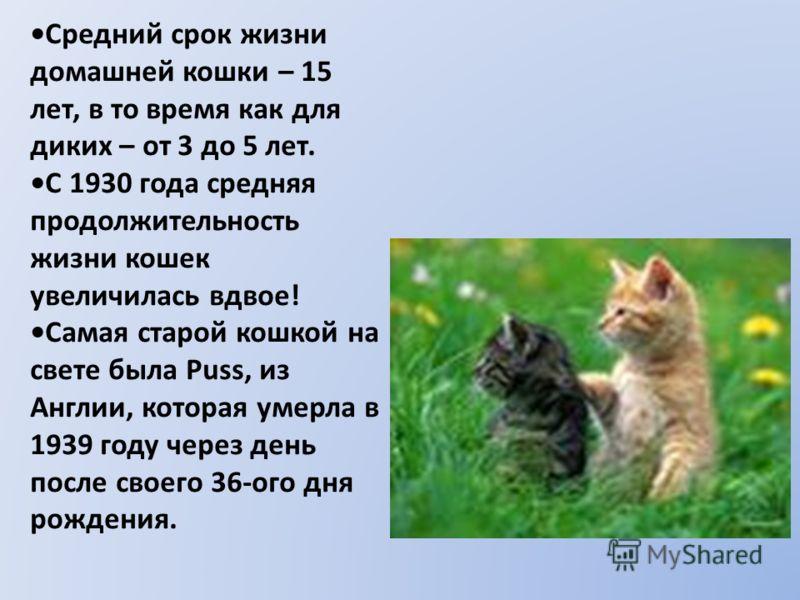 Средний срок жизни домашней кошки – 15 лет, в то время как для диких – от 3 до 5 лет. С 1930 года средняя продолжительность жизни кошек увеличилась вдвое! Самая старой кошкой на свете была Puss, из Англии, которая умерла в 1939 году через день после