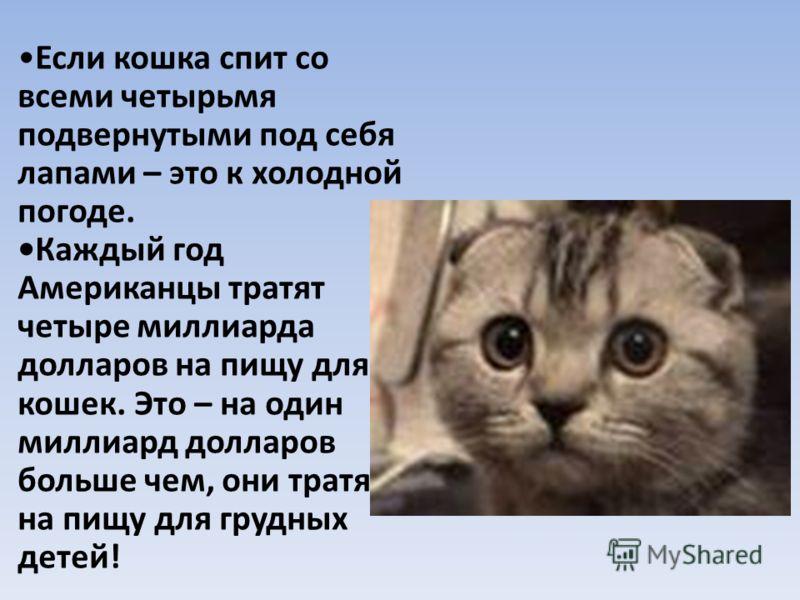 Если кошка спит со всеми четырьмя подвернутыми под себя лапами – это к холодной погоде. Каждый год Американцы тратят четыре миллиарда долларов на пищу для кошек. Это – на один миллиард долларов больше чем, они тратят на пищу для грудных детей!