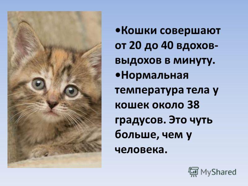 Кошки совершают от 20 до 40 вдохов- выдохов в минуту. Нормальная температура тела у кошек около 38 градусов. Это чуть больше, чем у человека.