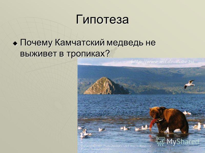 Гипотеза Почему Камчатский медведь не выживет в тропиках? Почему Камчатский медведь не выживет в тропиках?