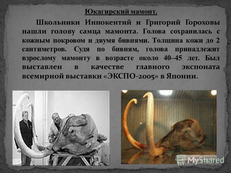 Юкагирский мамонт. Школьники Иннокентий и Григорий Гороховы нашли голову самца мамонта. Голова сохранилась с кожным покровом и двумя бивнями. Толщина кожи до 2 сантиметров. Судя по бивням, голова принадлежит взрослому мамонту в возрасте около 40–45 л