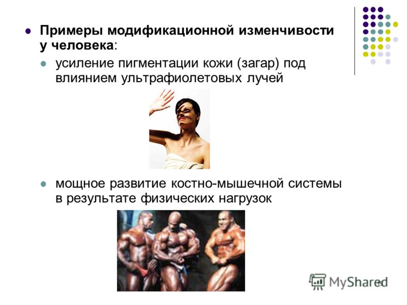 19 Примеры модификационной изменчивости у человека: усиление пигментации кожи (загар) под влиянием ультрафиолетовых лучей мощное развитие костно-мышечной системы в результате физических нагрузок