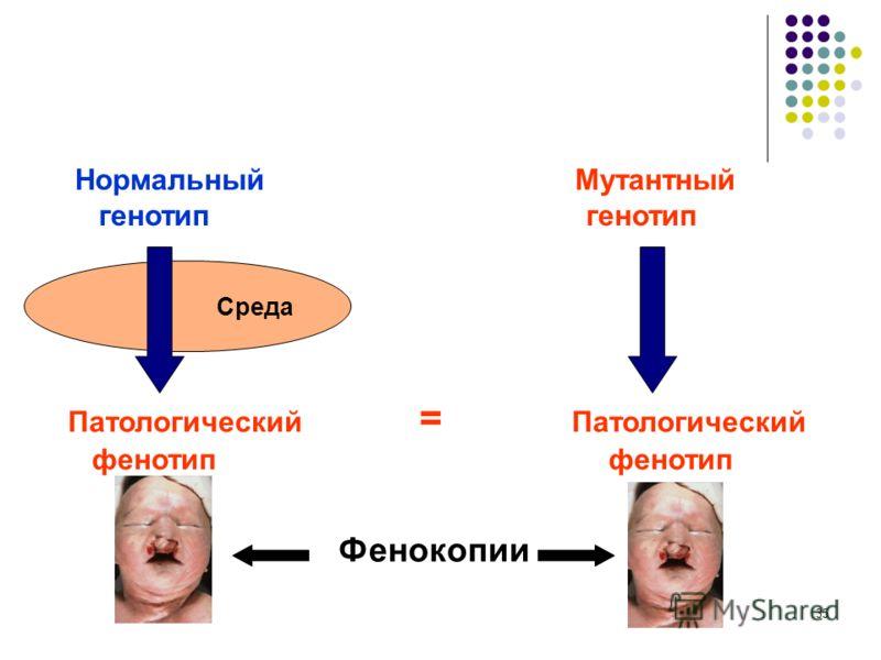35 Среда Нормальный Мутантный генотип генотип Патологический = Патологический фенотип фенотип Фенокопии