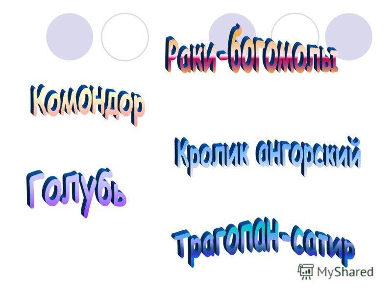 Подготовила: ученица 10 класса «А» Сторожко Анастасия