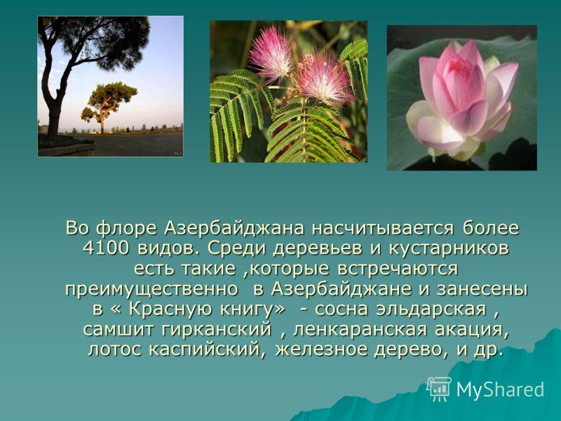 Во флоре Азербайджана насчитывается более 4100 видов. Среди деревьев и кустарников есть такие,которые встречаются преимущественно в Азербайджане и занесены в « Красную книгу» - сосна эльдарская, самшит гирканский, ленкаранская акация, лотос каспийски