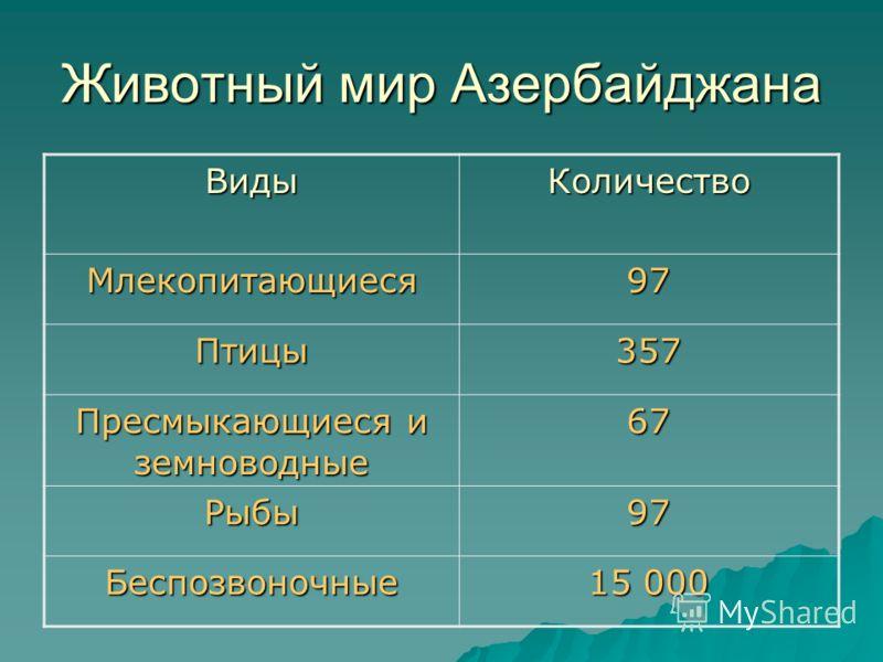 Животный мир Азербайджана ВидыКоличество Млекопитающиеся97 Птицы357 Пресмыкающиеся и земноводные 67 Рыбы97 Беспозвоночные 15 000