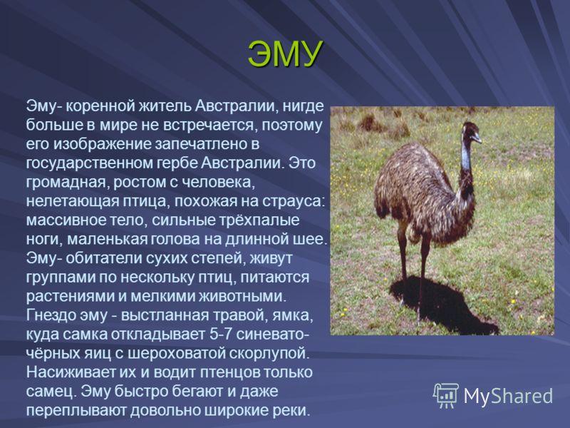 необычные животные мира с описанием с картинками презентация подразделяют следующие основные
