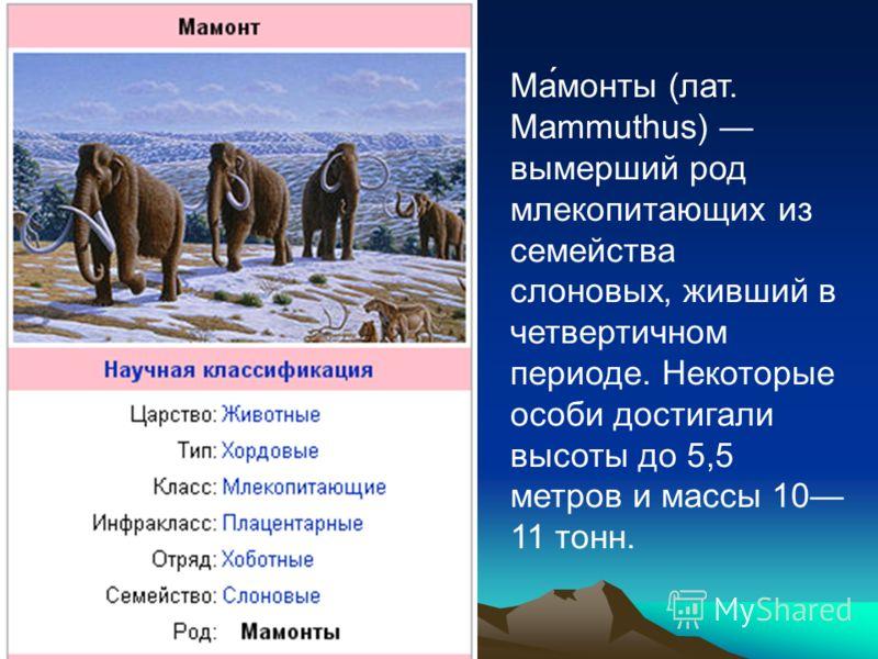 Ма́монты (лат. Mammuthus) вымерший род млекопитающих из семейства слоновых, живший в четвертичном периоде. Некоторые особи достигали высоты до 5,5 метров и массы 10 11 тонн.