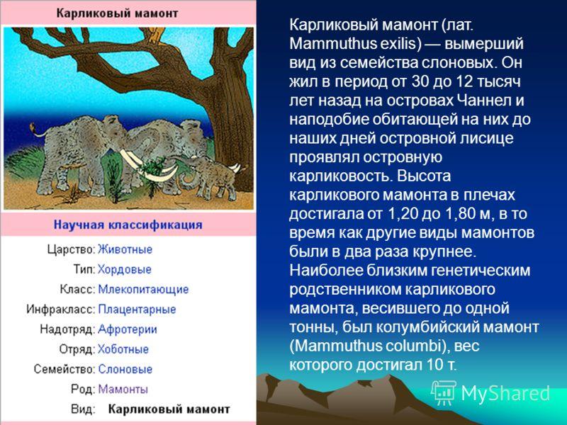 Карликовый мамонт (лат. Mammuthus exilis) вымерший вид из семейства слоновых. Он жил в период от 30 до 12 тысяч лет назад на островах Чаннел и наподобие обитающей на них до наших дней островной лисице проявлял островную карликовость. Высота карликово