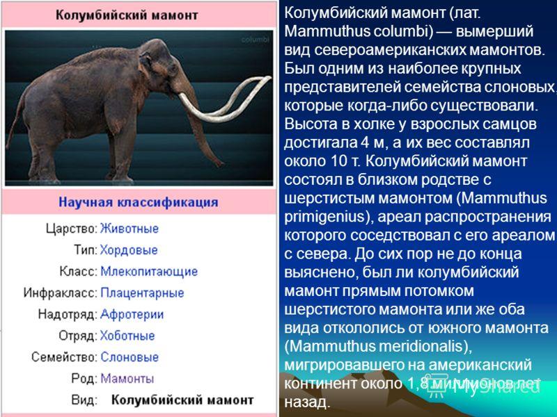 Колумбийский мамонт (лат. Mammuthus columbi) вымерший вид североамериканских мамонтов. Был одним из наиболее крупных представителей семейства слоновых, которые когда-либо существовали. Высота в холке у взрослых самцов достигала 4 м, а их вес составля