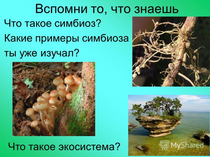 Вспомни то, что знаешь Что такое симбиоз? Какие примеры симбиоза ты уже изучал? Что такое экосистема?