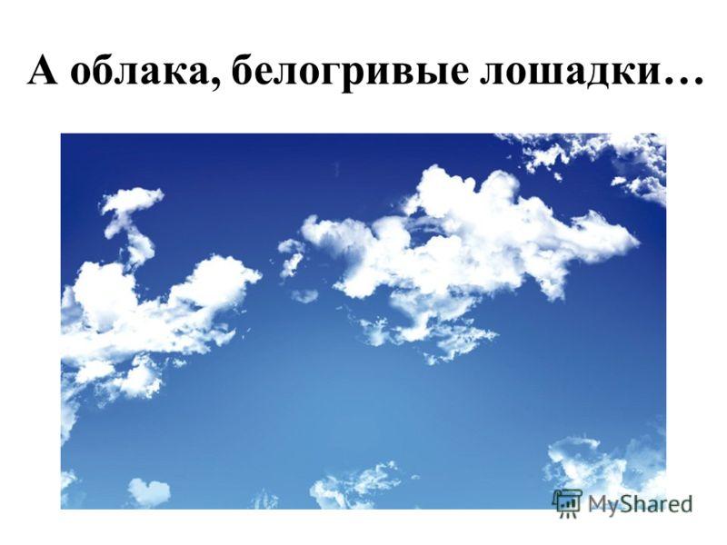 А облака, белогривые лошадки…