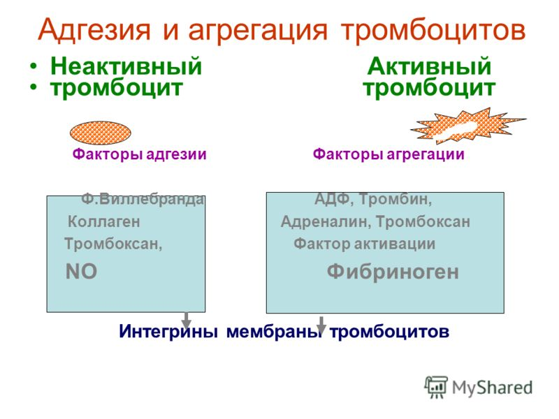 Фазы сосудисто-тромбоцитарного гемостаза 1.Рефлекторный спазм поврежденных сосудов 2.Адгезия тромбоцитов 3.Обратимая агрегация (скучивание) тромбоцитов 4.Необратимая агрегация тромбоцитов 5.Ретракция тромбоцитарного тромба