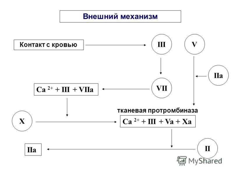ФАЗЫ СВЕРТЫВАНИЯ Наименование фазыДлительность 1Образование протромбиназы Внешняя - 4-5 мин. Внутренняя – 3-5 сек. 2Образование тромбина3-5 секунд 3Образование фибрина3-5 секунд 4Стабилизация фибрина и ретракция сгустка Минуты 5ФибринолизЧасы