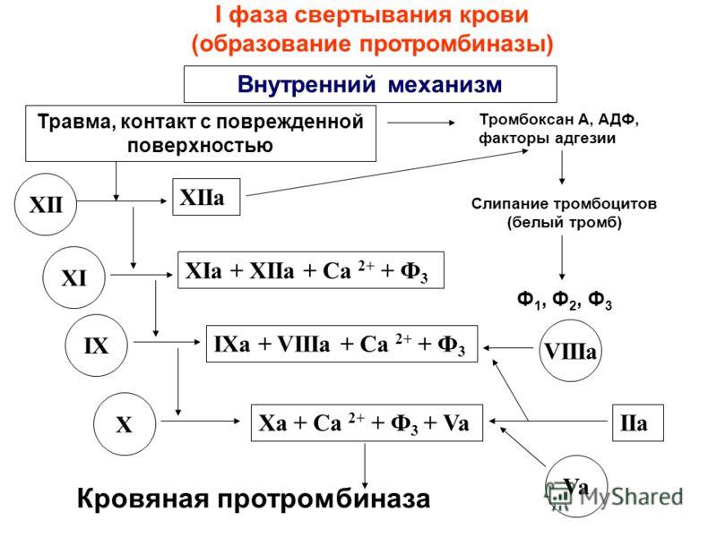 Внешний механизм Контакт с кровью III Ca 2+ + III + VIIa VII X Ca 2+ + III + Va + Xa тканевая протромбиназа V IIa II IIa