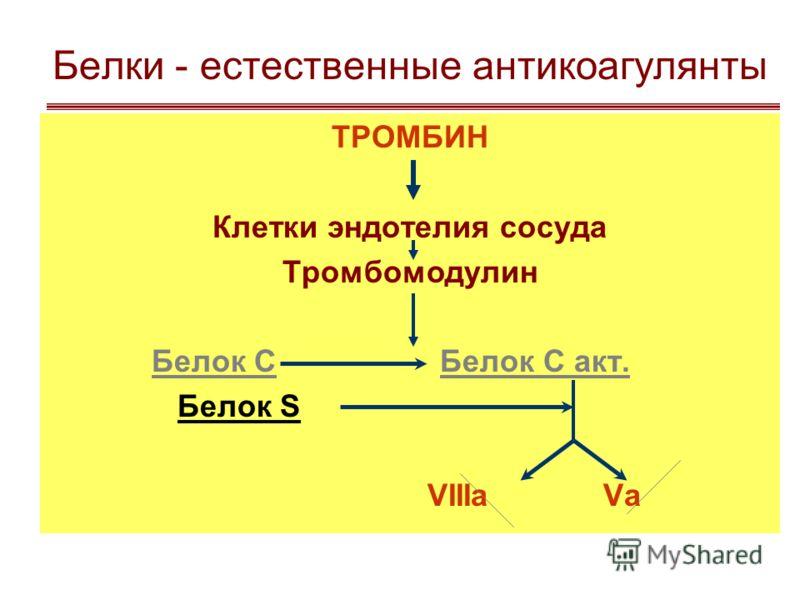 Естественные антикоагулянты первичныевторичные - гепарин - антипротромбиназы - антитромбин - фибрин - продукты гидролиза фибрина - продукты гидролиза тромбина