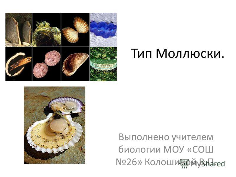 Тип Моллюски. Выполнено учителем биологии МОУ «СОШ 26» Колошиной В.П.