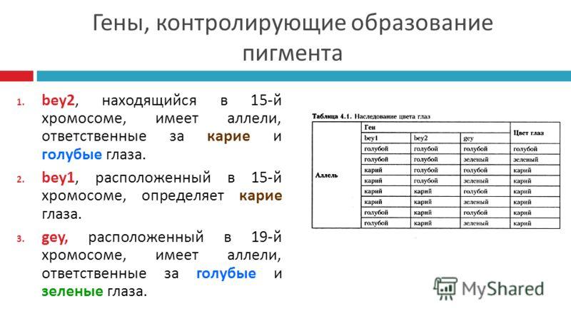 Гены, контролирующие образование пигмента 1. bey2, находящийся в 15-й хромосоме, имеет аллели, ответственные за карие и голубые глаза. 2. bey1, расположенный в 15-й хромосоме, определяет карие глаза. 3. gey, расположенный в 19-й хромосоме, имеет алле