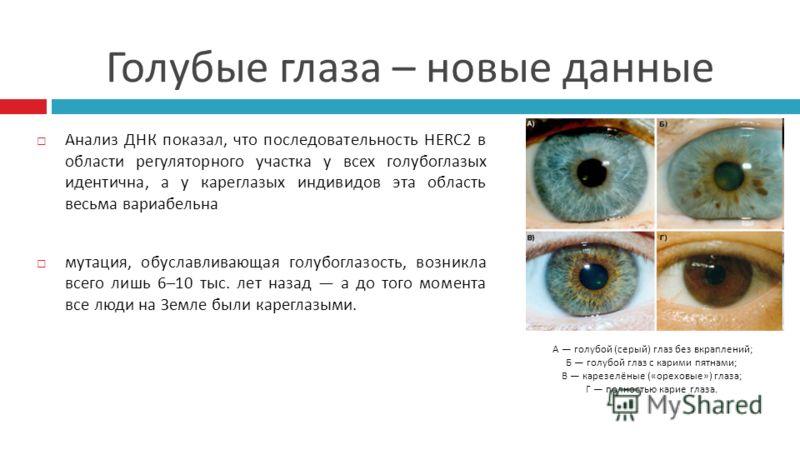 Голубые глаза – новые данные Анализ ДНК показал, что последовательность HERC2 в области регуляторного участка у всех голубоглазых идентична, а у кареглазых индивидов эта область весьма вариабельна мутация, обуславливающая голубоглазость, возникла все