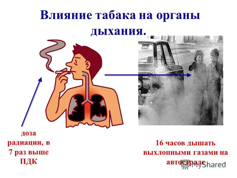 Влияние табака на органы дыхания. доза радиации, в 7 раз выше ПДК 16 часов дышать выхлопными газами на автостраде