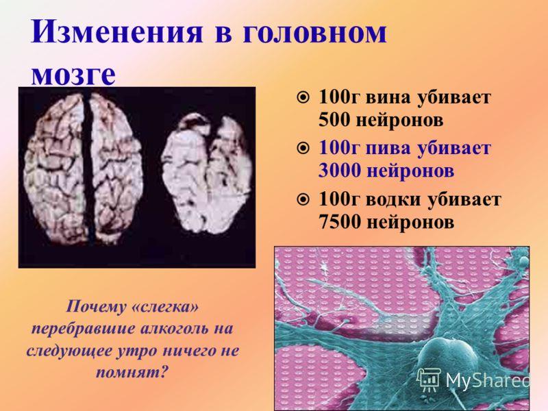 Изменения в головном мозге 100г вина убивает 500 нейронов 100г пива убивает 3000 нейронов 100г водки убивает 7500 нейронов Почему «слегка» перебравшие алкоголь на следующее утро ничего не помнят?