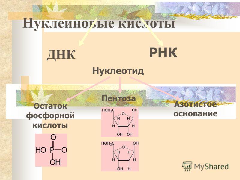 Нуклеиновые кислоты ДНК Нуклеотид Азотистое основание Пентоза Остаток фосфорной кислоты РНК