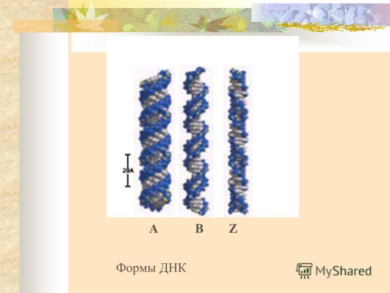 АВZ Формы ДНК