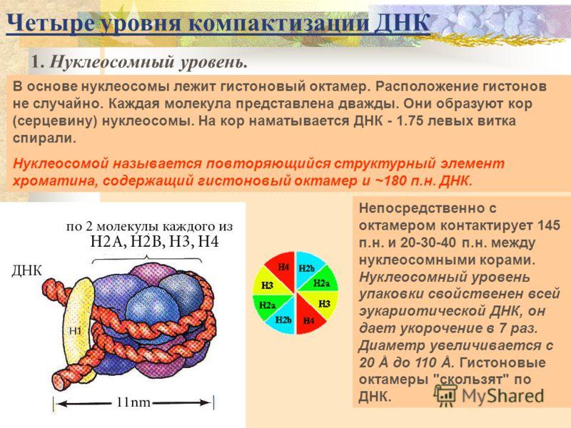 Четыре уровня компактизации ДНК 1. Нуклеосомный уровень. В основе нуклеосомы лежит гистоновый октамер. Расположение гистонов не случайно. Каждая молекула представлена дважды. Они образуют кор (серцевину) нуклеосомы. На кор наматывается ДНК - 1.75 лев