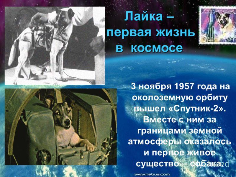 Лайка – первая жизнь в космосе 3 ноября 1957 года на околоземную орбиту вышел «Спутник-2». Вместе с ним за границами земной атмосферы оказалось и первое живое существо – собака.