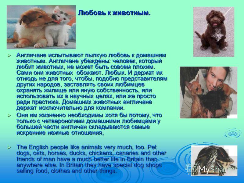 Любовь к животным. Англичане испытывают пылкую любовь к домашним животным. Англичане убеждены: человек, который любит животных, не может быть совсем плохим. Сами они животных обожают. Любых. И держат их отнюдь не для того, чтобы, подобно представител