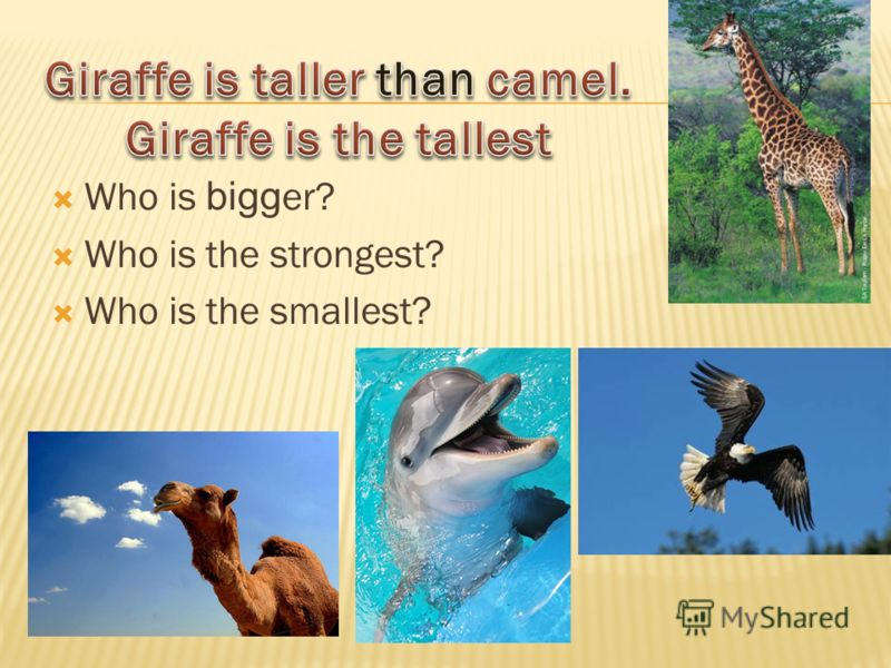 Who is bigg er? Who is the strongest? Who is the smallest?