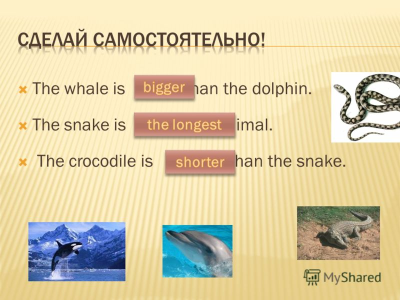 The whale is (big) than the dolphin. The snake is (long) animal. The crocodile is (short) than the snake.