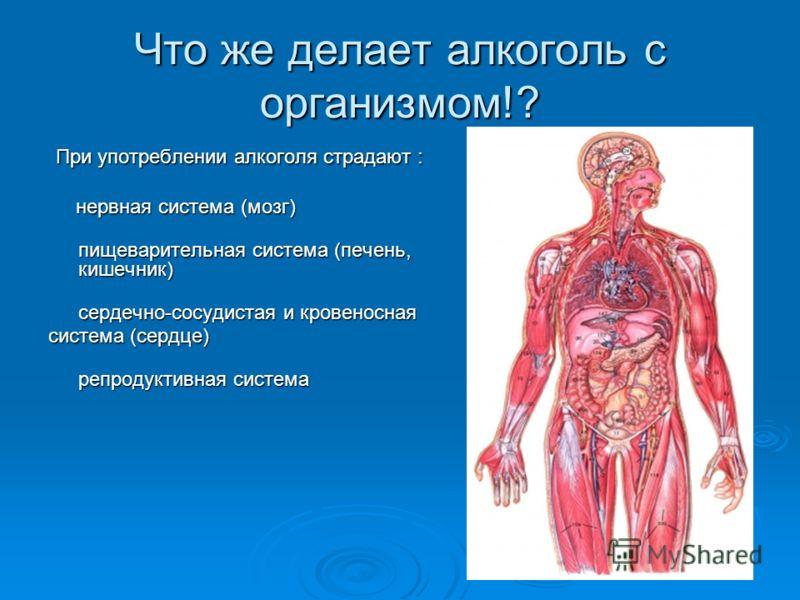 Что же делает алкоголь с организмом!? При употреблении алкоголя страдают : При употреблении алкоголя страдают : нервная система (мозг) нервная система (мозг) пищеварительная система (печень, кишечник) пищеварительная система (печень, кишечник) сердеч