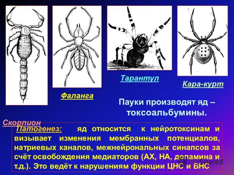 Скорпион Фаланга Тарантул Кара-курт Пауки производят яд – токсоальбумины. Патогенез: яд относится к нейротоксинам и визывает изменения мембранных потенциалов, натриевых каналов, межнейрональных синапсов за счёт освобождения медиаторов (АХ, НА, допами