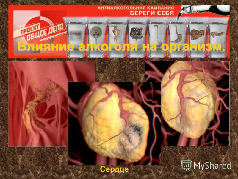 Влияние алкоголя на организм. Сердце
