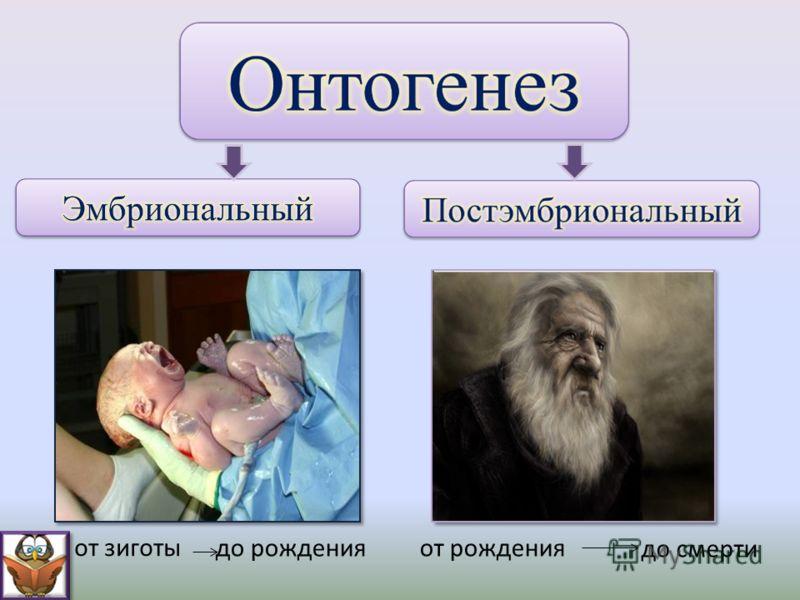 до рожденияот рождения до смерти от зиготы