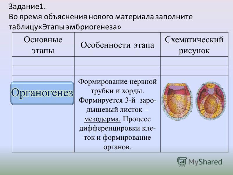 Задание1. Во время объяснения нового материала заполните таблицу«Этапы эмбриогенеза» Основные этапы Особенности этапа Схематический рисунок Формирование нервной трубки и хорды. Формируется 3- й заро - дышевый листок – мезодерма. Процесс дифференциров